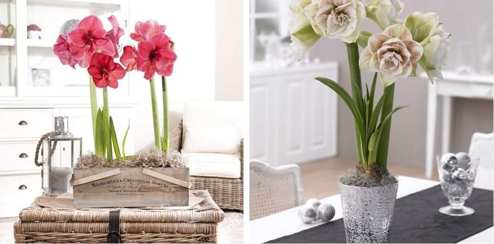 Longfield Gardens Flower Box Gift Design Connection Inc Kansas City Interior Design Blog